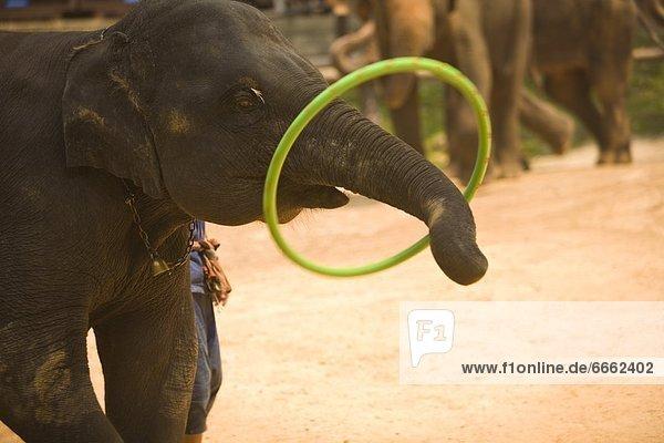 nahe  camping  Elefant  Südostasien  Wohnsiedlung  Thailand
