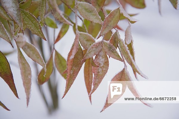 Pflanzenblatt Pflanzenblätter Blatt