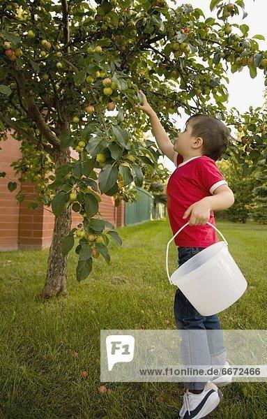 Junge - Person  klein  Apfel  aufheben