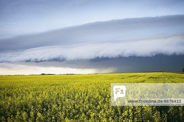 Himmel  über  Sturm  Feld  Canola
