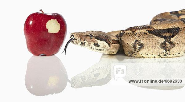 nebeneinander  neben  Seite an Seite  Apfel
