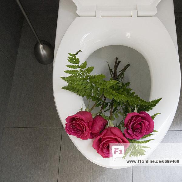 Rose Toilette