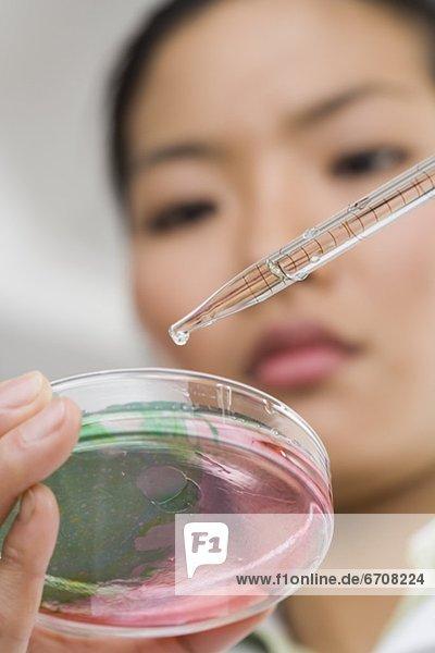 sehen  Essgeschirr  Wissenschaftler
