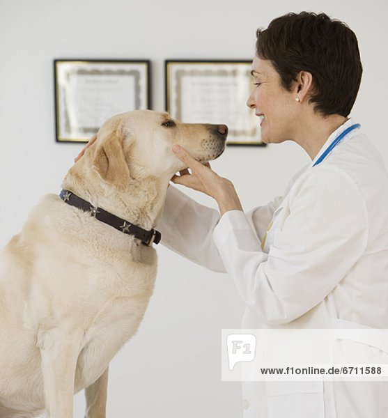 Hund  Tierarzt  Untersuchung