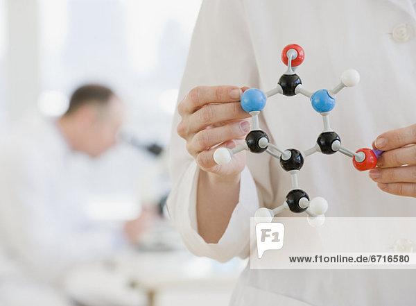 Wissenschaftler  Modell  halten  Molekül