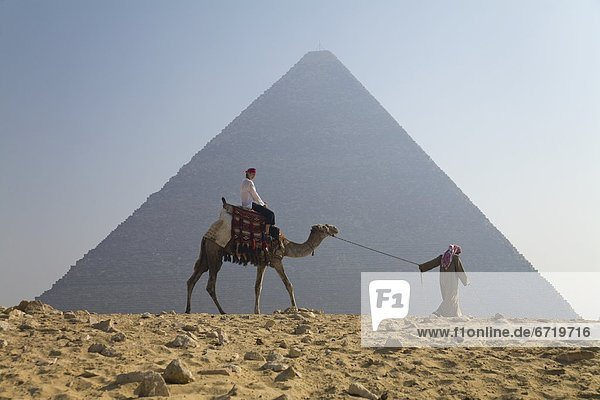 pyramidenförmig  Pyramide  Pyramiden  Führung  Anleitung führen  führt  führend  Frau  fahren  führen  Tourist  Kamel  Gise  Blei