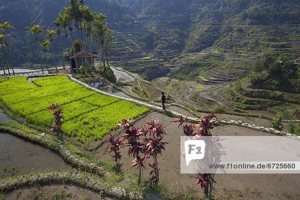 gehen  Junge - Person  Reis  Reiskorn  Veranda
