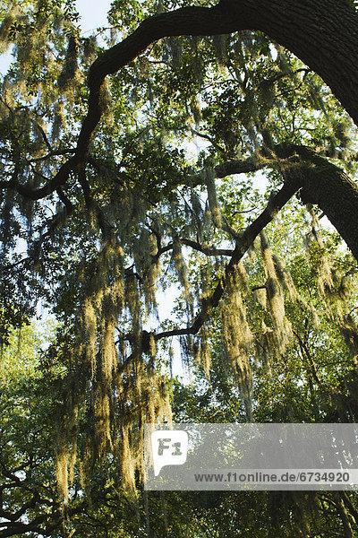 Vereinigte Staaten von Amerika  USA  Savannah