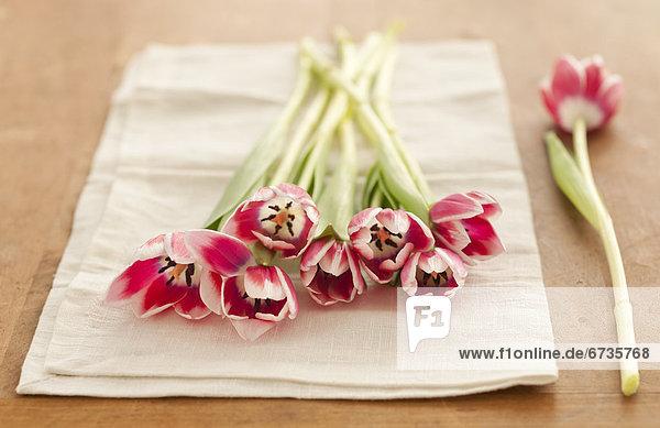 pink  Tulpe