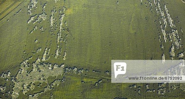 Vom Wind gezeichnetes Weizenfeld  Luftbild