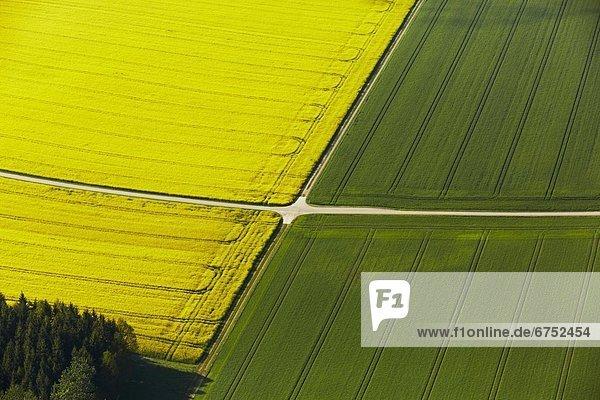 Rapsfeld und Weizenfeld durckreuzt von Feldwegen  Luftbild