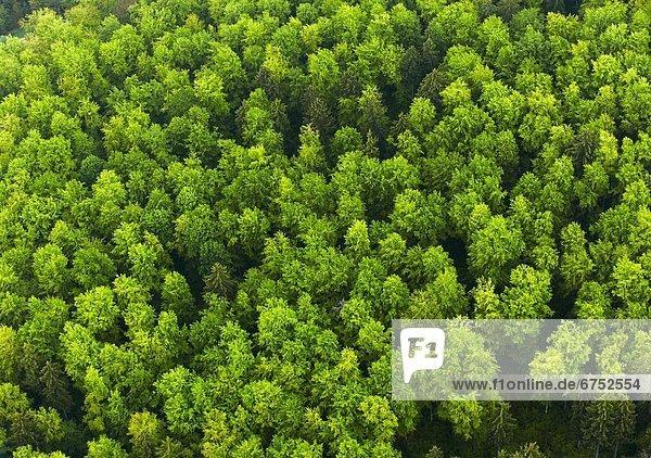 Buchenwald im Frühling  Luftbild Buchenwald im Frühling, Luftbild