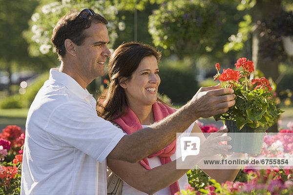 Blume kaufen