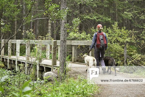 Frau  wandern  2  Labrador  Golden Retriever  Lake Louise  Banff Nationalpark  Alberta