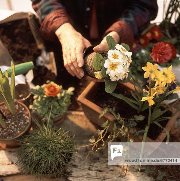 Frau  British Columbia  anpflanzen  Terrakotta
