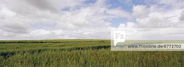 Feld Gras