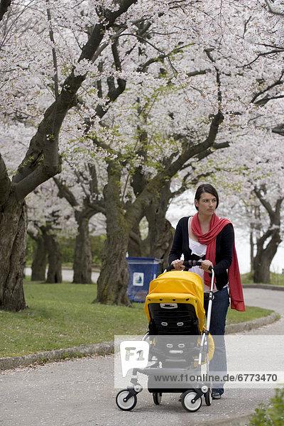 hoch  oben  Frau  gehen  Kirsche  Nostalgie  blühen  Kinderwagen  Ontario  Toronto