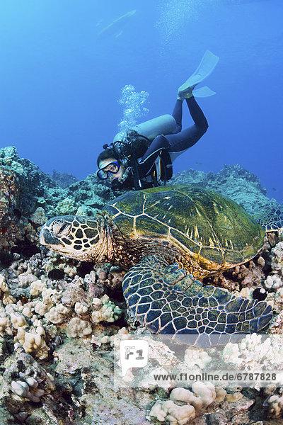 Wasserschildkröte Schildkröte hoch oben nahe grün Ansicht