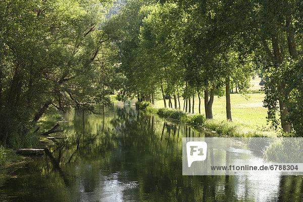 Avenue of trees along the Gacka River  Dalmatia  Croatia  Southern Europe  Europe