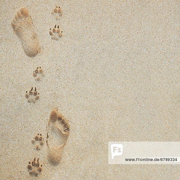 Hawaii  Oahu  Fußabdrücke und Pawprints im Sand.