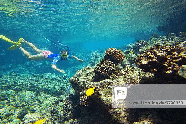 Hawaii  Maui  Makena  Ahihi Kinau Naturreservat Bereich Schnorchler in klarem Ozeanwasser über Riff.