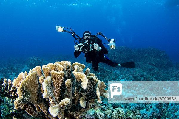 Big Island  Hawaii Kona Küste  Fotograf Diver schwimmt entlang Meeresboden in der Nähe von Coral.