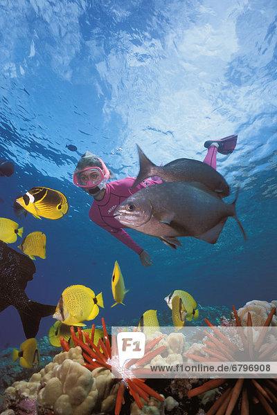Tropisch Tropen subtropisch Fisch Pisces Frau Vielfalt schnorcheln