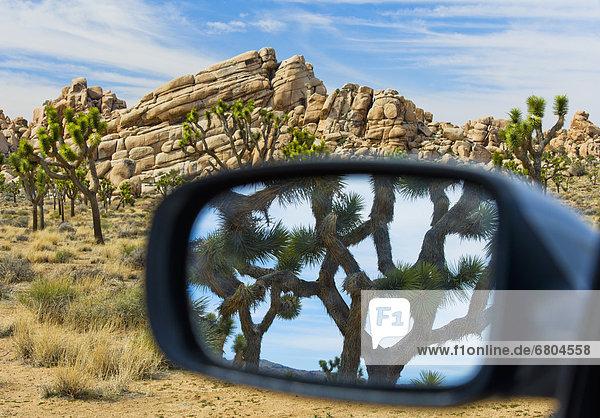 Vereinigte Staaten von Amerika  USA  Baum  Spiegelung  Ansicht  Seitenansicht  Joshua Tree Nationalpark  Joshua Tree  Yucca brevifolia  Kalifornien  Spiegel