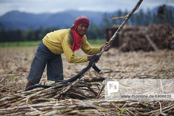 nahe  Spazierstock  Stock  arbeiten  ernten  Großstadt  Feld  Zucker  jung  multikulturell  Philippinen