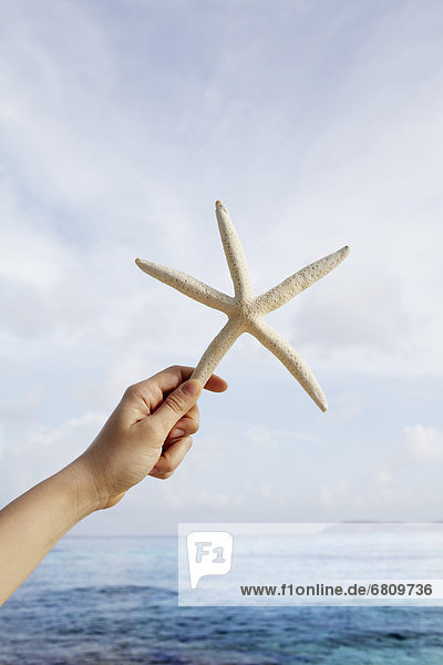 United States Virgin Islands  St. John  Starfish held by female hand
