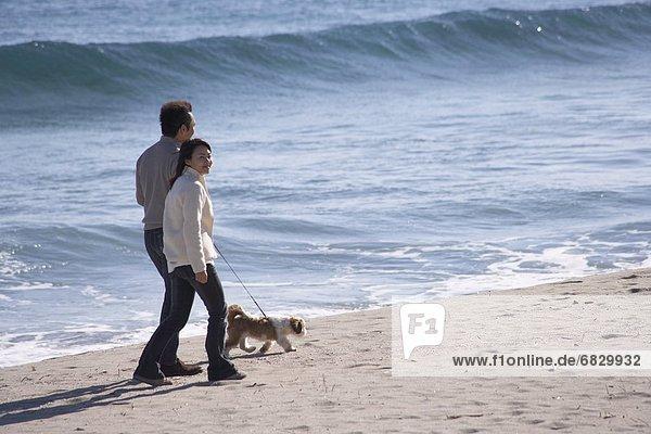 gehen  Strand  Hund