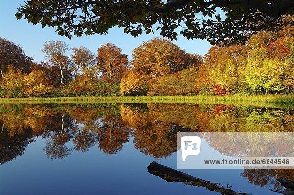 Stilleben  still  stills  Stillleben  Baum  Wald  See  Spiegelung  Herbst  Japan