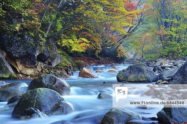 Tal Fluss Laub Japan
