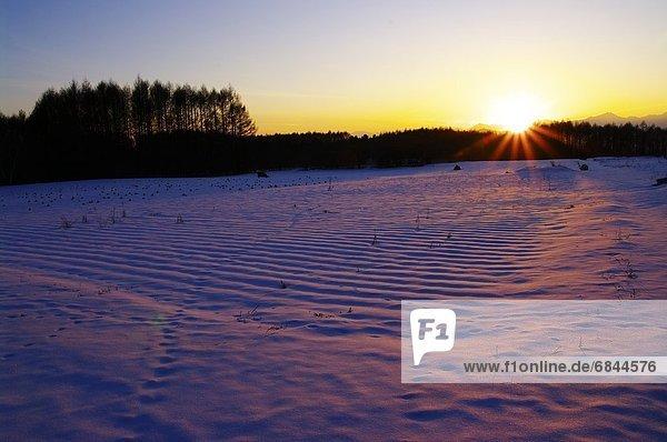 Sonnenuntergang  Baum  über  Schnee  Feld  Strauch  Lärche  Nagano  Japan