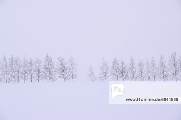 Winter  Baum  Schnee  Feld  Silber  Birke