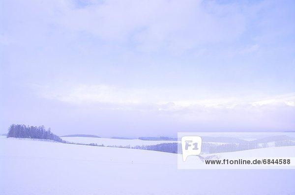 Winter  Schnee  Wald  Feld  Biei  Hokkaido  Hokkaido  Japan  Kamikawa