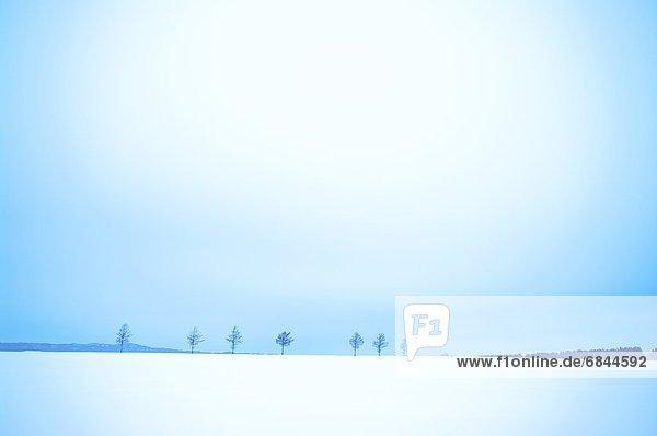Winter  Baum  Schnee  Feld  nackt  Abashiri  Hokkaido  Japan