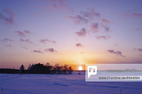 Winter  Tischset  Baum  über  Schnee  Feld  Hokkaido  Japan  Sonne
