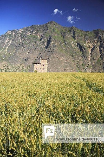 hinter Berg Wohnhaus klein Ziegelstein Feld Reis Reiskorn China Sichuan