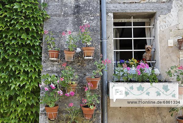 Frankreich Fenster Hund hinaussehen Gironde