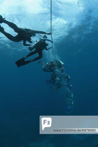 Divers following a current lile  Roatan  Bay Islands  Honduras  Caribbean  Central America