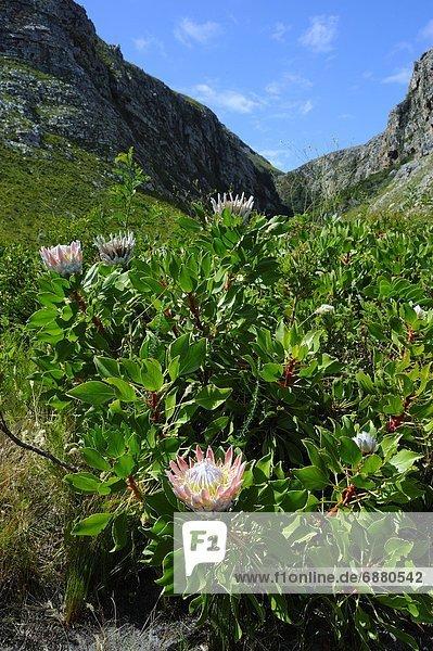 Südliches Afrika  Südafrika  Afrika  Garden Route