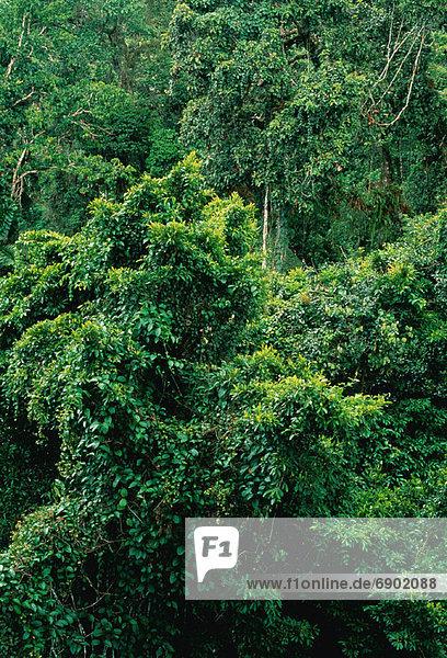Tropisch  Tropen  subtropisch  Ecuador  Regenwald