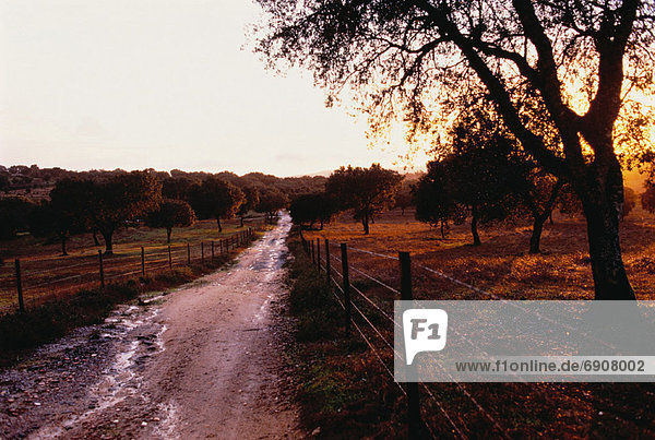 Dirt Road through Field with Fence at Sunset  Portugal