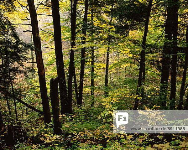 Wald  Kanada  Ontario