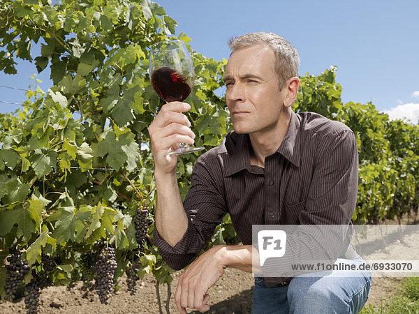 Mann  Inspektion  Wein Mann ,Inspektion ,Wein