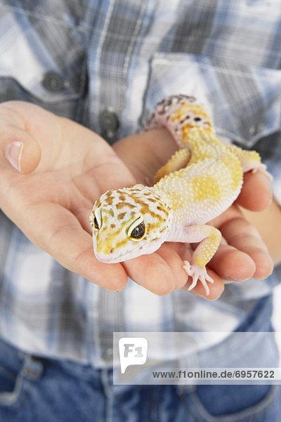 Hands Holding Lizard