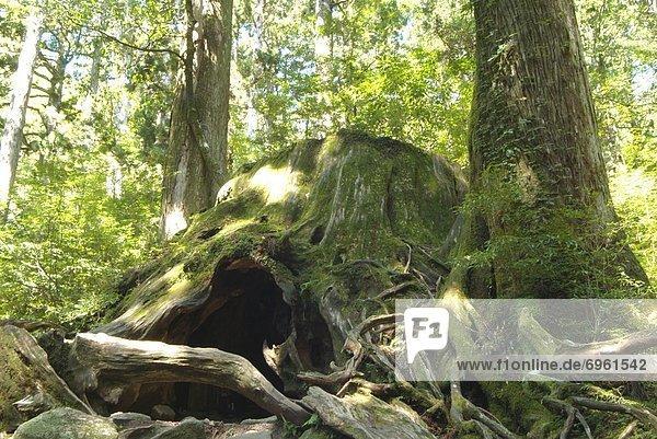 Baum  Wald  Baumstumpf