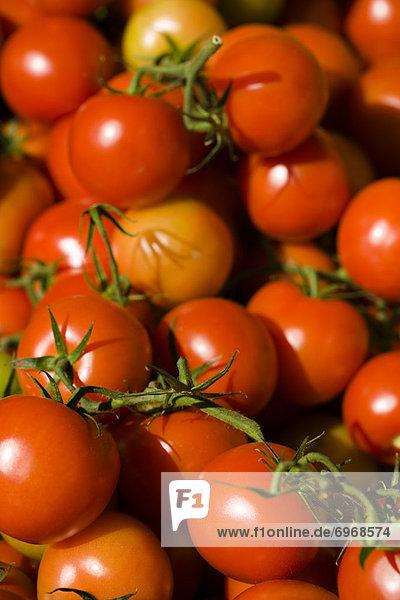 Tomate  Pflanze  Kletterpflanze  britisch