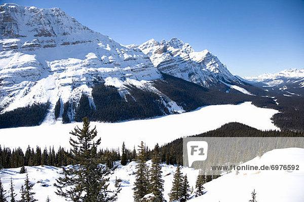 Rocky Mountains  Peyto Lake  Banff Nationalpark  Alberta  Kanada